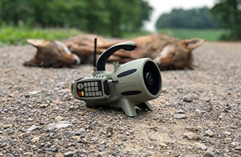 How to Use A Coyote Call - The Ultimate Guide